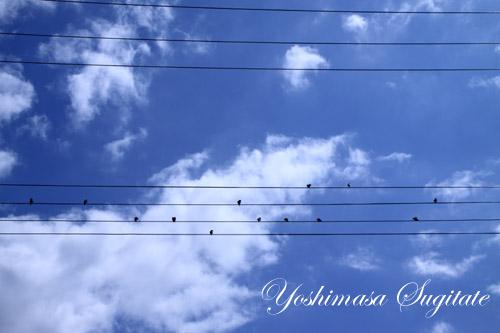 photo575_natsuzorayakazokudekanaderuhamoni.jpg