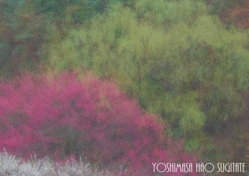 sousyun500.jpg